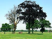 Kasteel De Swanenburg - Gendringen  Regio Achterhoek - Liemers