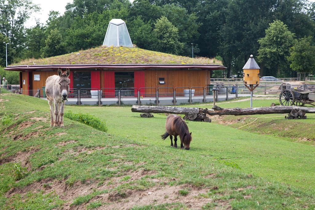 Kinderboerderij Engbergen - Gendringen - IMG_2759