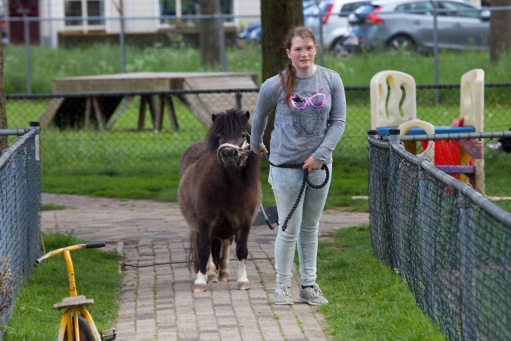 Kinderboerderij Kokiezier - Doetinchem - IMG_2200 Regio Achterhoek - Liemers