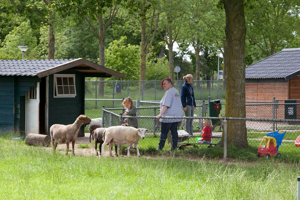 Kinderboerderij Kokiezier - Doetinchem - IMG_2261 Regio Achterhoek - Liemers