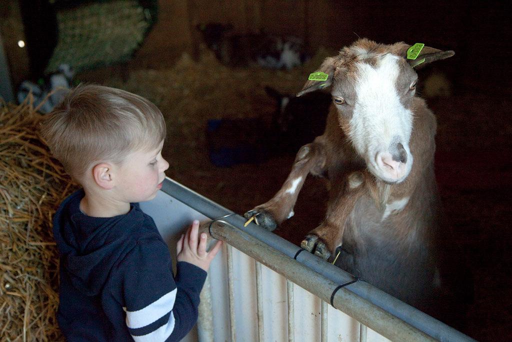 Kinderboerderij Kokiezier in Doetinchem