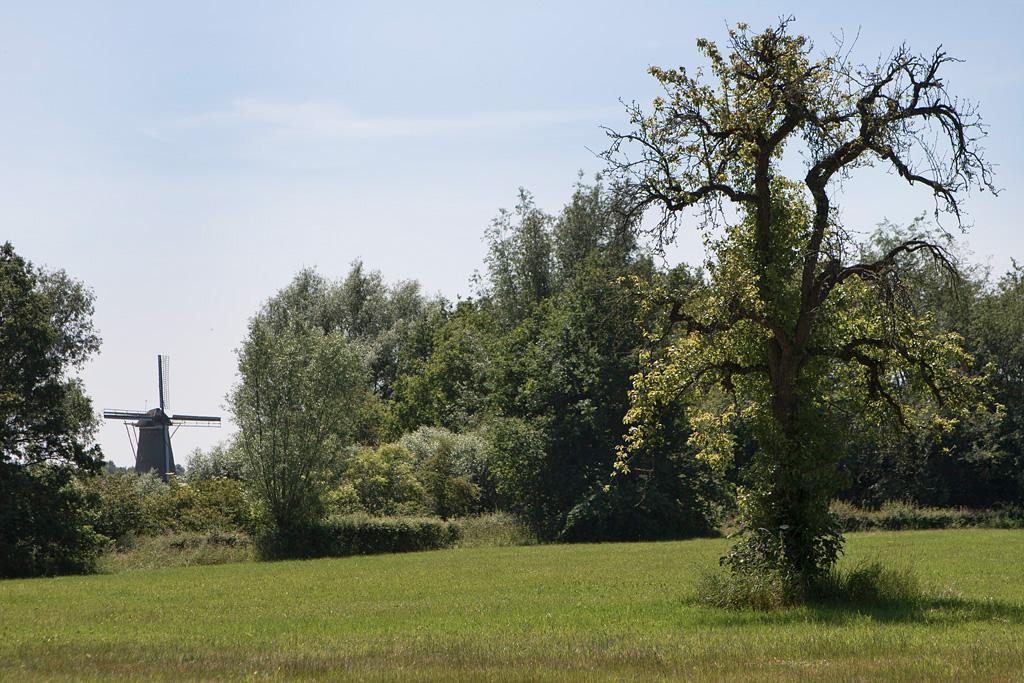 Bronkhorster Molen - Steenderen - IMG_8954