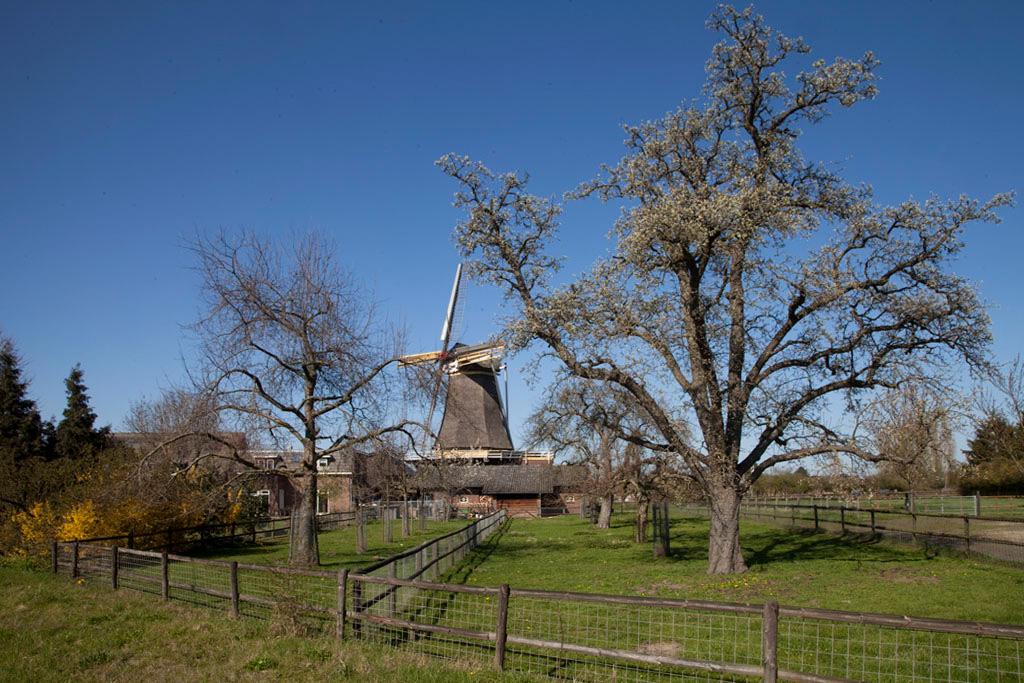 Molen de Hoop - Oud Zevenaar - IMG_0173 Regio Achterhoek - Liemers